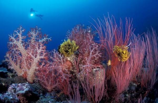 тайны жизни под гладью моря